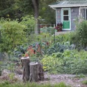 Garden Recordkeeping: Make a Map of Your Garden
