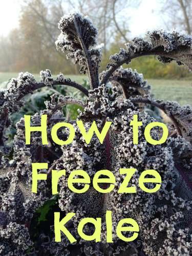 Creative Vegetable Gardener:How To Freeze Kale - Creative