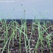 5 Common Mistakes of Seed Starting