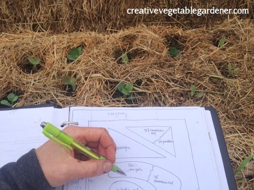 Planting seedlings the right way