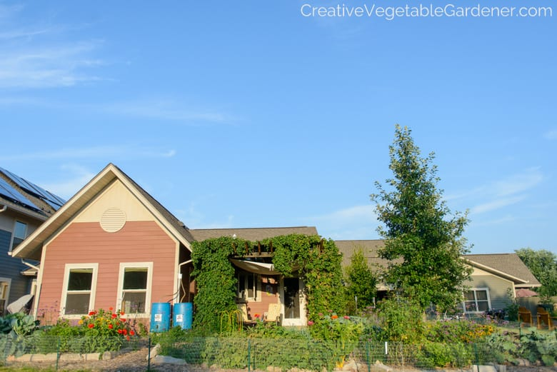 vegetable garden and house in summer with blue sky