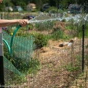 How to Water Your Vegetable Garden in Summer