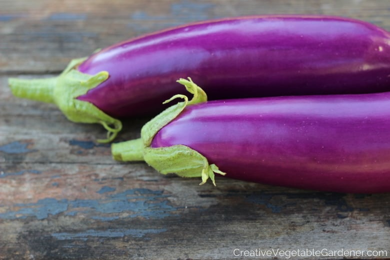Colorful Garden Vegetables