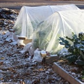 Protect Your Plants with Row Cover