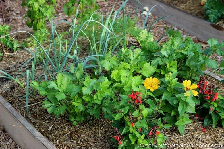 Creative Vegetable Gardener:Create an Artistic Vegetable Garden to .... Creative Vegetable Gardener - best vegetable garden design