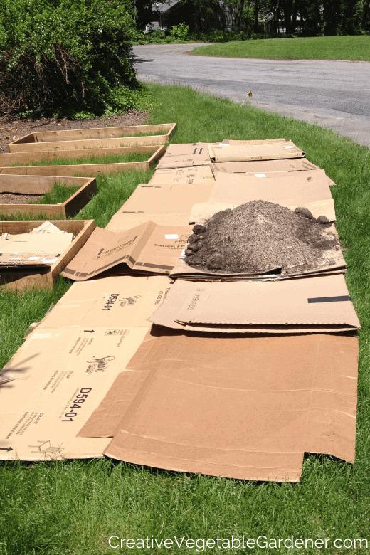 cardboard to make a garden bed