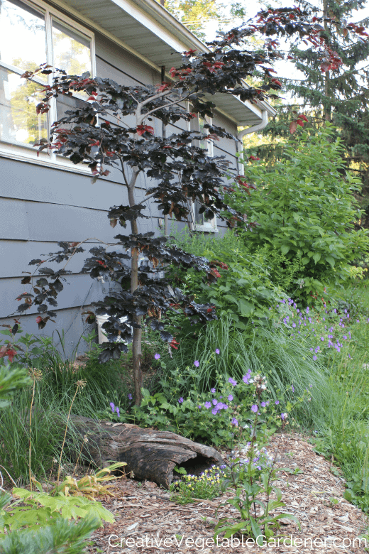 trees and flowers growing in a bed