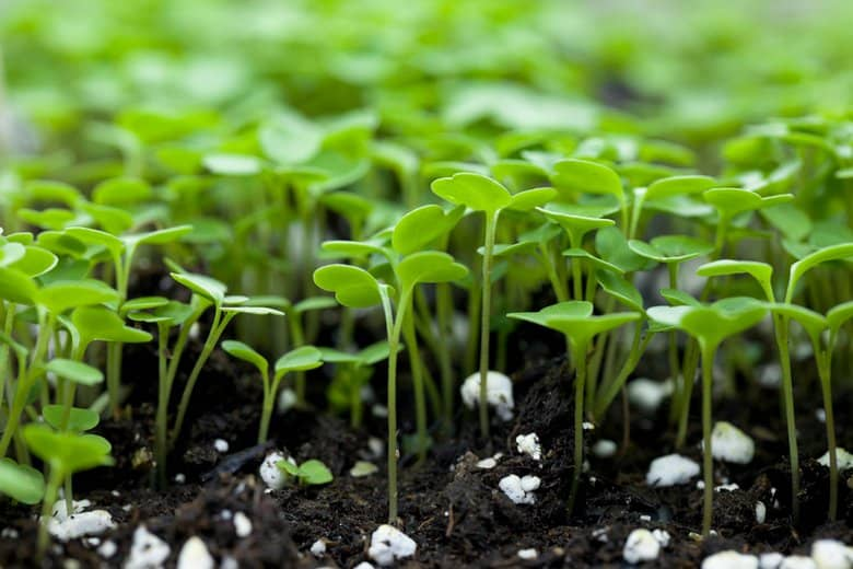Grow You Own Microgreens.