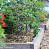 Gardening Doesn't Have to Be Difficult