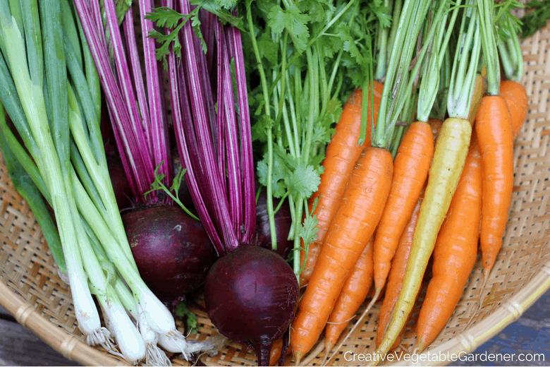 garden harvest in a basket