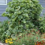 photo of lush vegetable garden