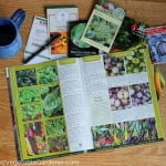 seed catalogs spread out for garden planning