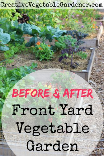 Creative Vegetable GardenerFront Yard Garden Before