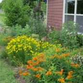 The #1 Perennial Flower Garden Mistake