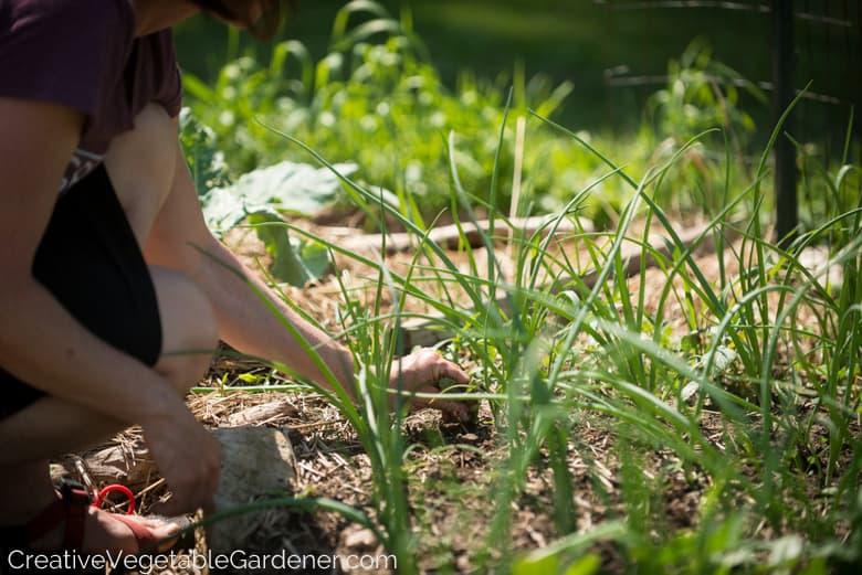 Beginning Gardener Mistakes to Avoid