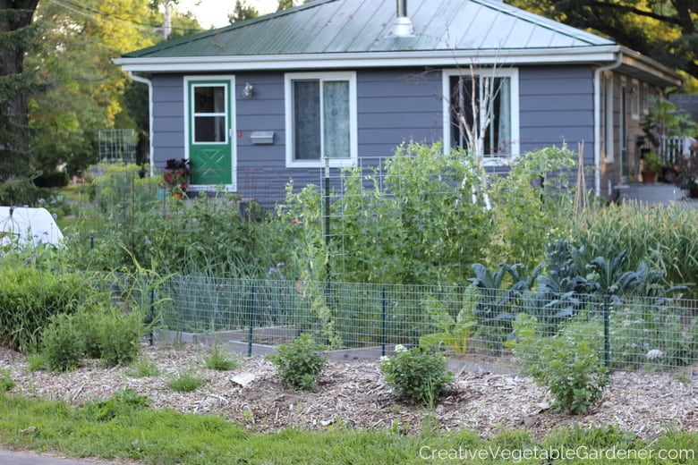 front yard vegetable garden with house in background