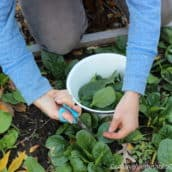 Plant a Fall Garden and Harvest Through the Holidays