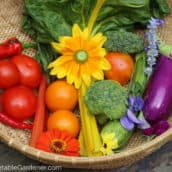 How to Grow a Colorful Vegetable Garden