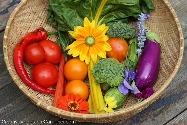 colorful vegetable harvest