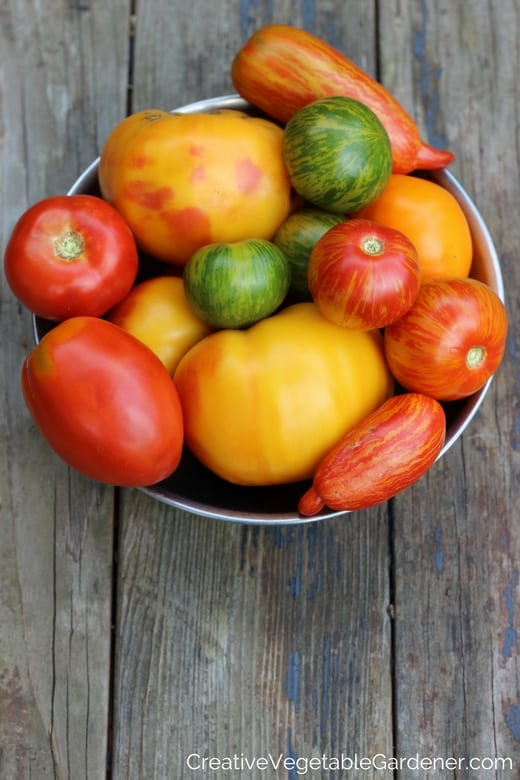 garden fresh tomatoes in a bowl