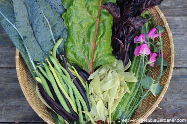 basket of garden harvest vegetables