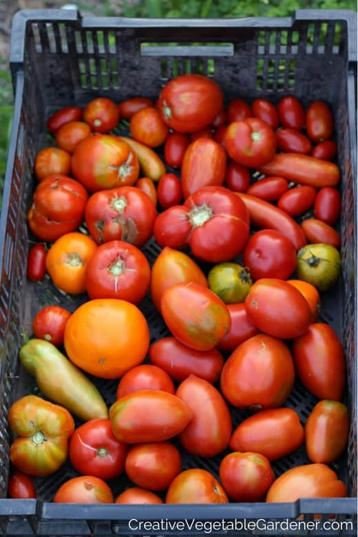 Creative Vegetable GardenerHow Many Different Varieties Should – When Do You Plant a Vegetable Garden