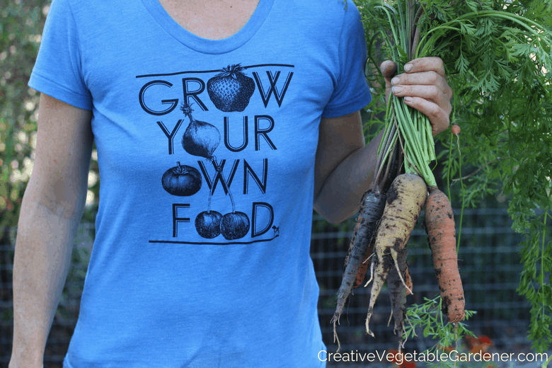 growing a fall garden and harvesting carrots