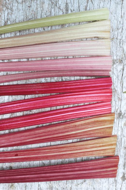 bright swiss chard stems