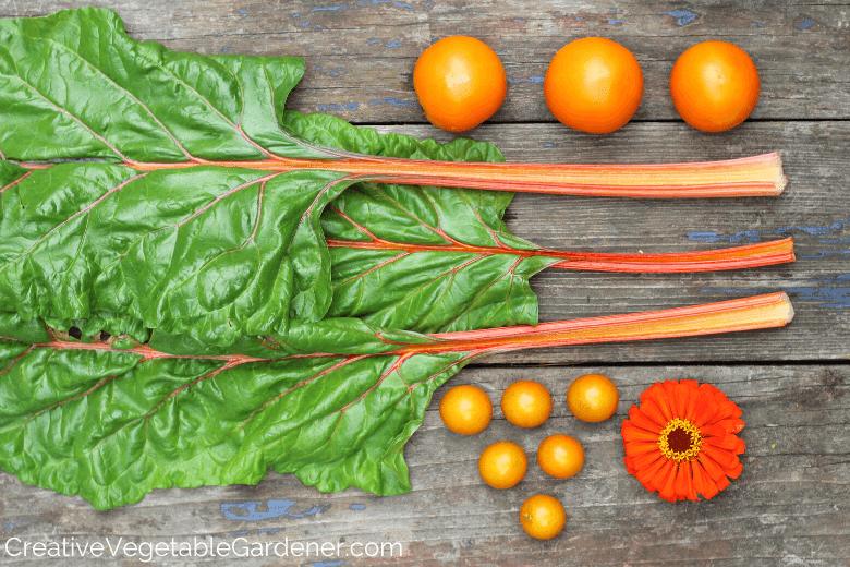 harvest of orange vegetables