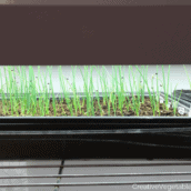 How to Raise Healthy Seedlings at Home