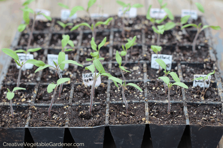 tips for seed germination