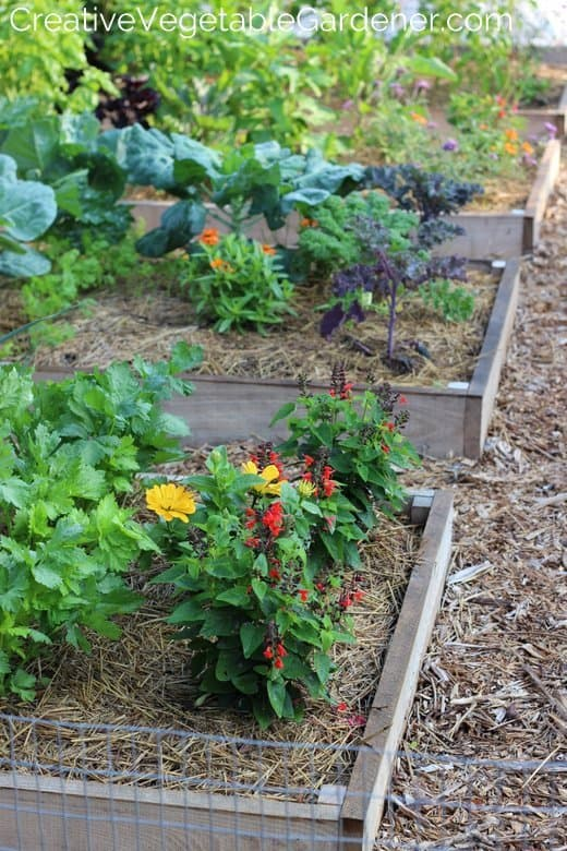 Creative Vegetable Gardener:One of the Most Asked Garden Questions ...