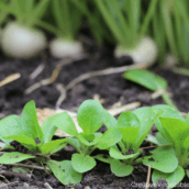 How to easily and quickly prep your garden beds for planting