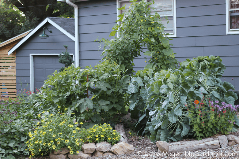 vegetable garden in summer with mulch