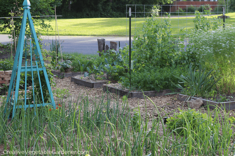 how to mulch your vegetable garden