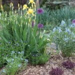 perennial flower garden design in spring