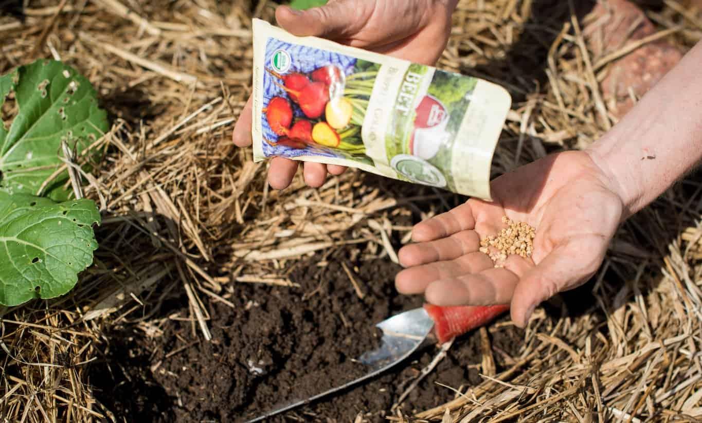 Creative Vegetable Gardener:Smart Start Garden School - Creative ...