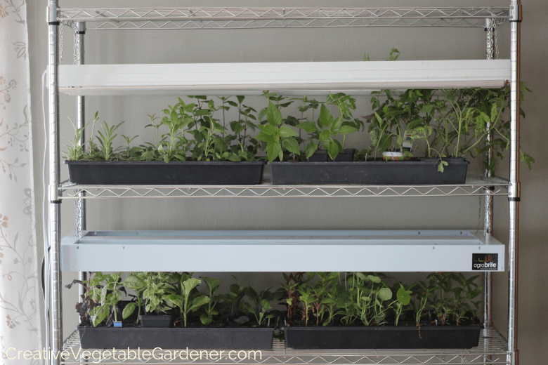 grow light rack seed starting