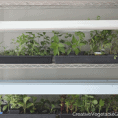 How to Make the Ultimate DIY Grow Light Stand