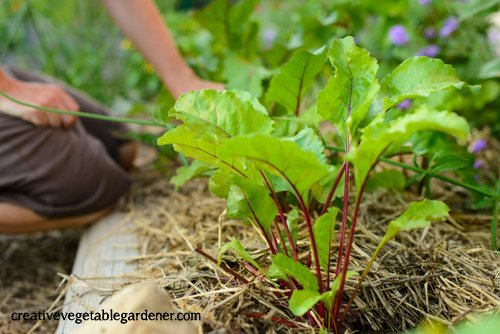 What Not to Grow in Your Garden