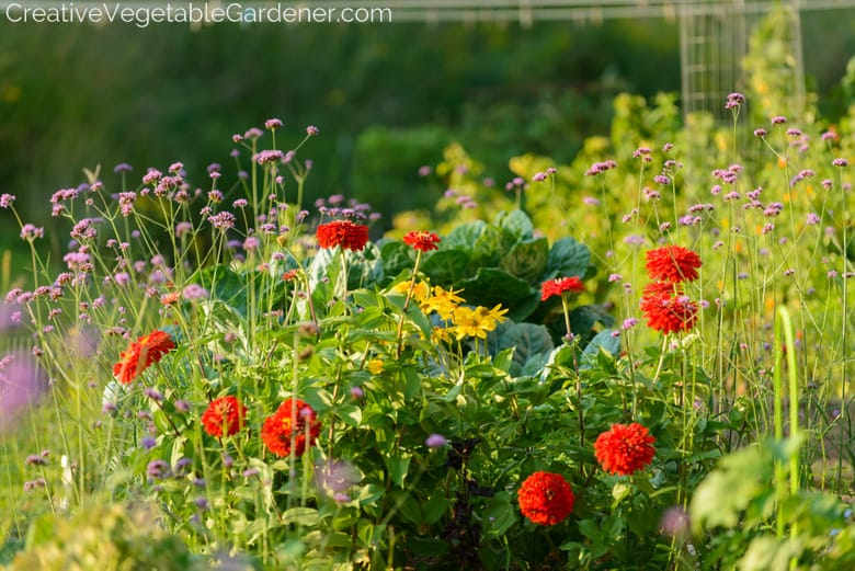 flowers in the vegetable garden