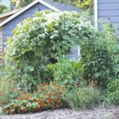 5 unique ideas to make your garden more beautiful
