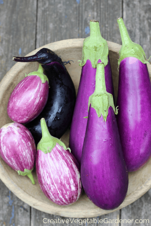 vegetables to grow in community garden plot