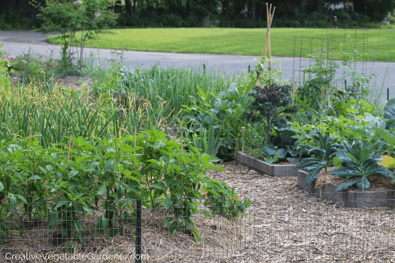 how to build garden beds