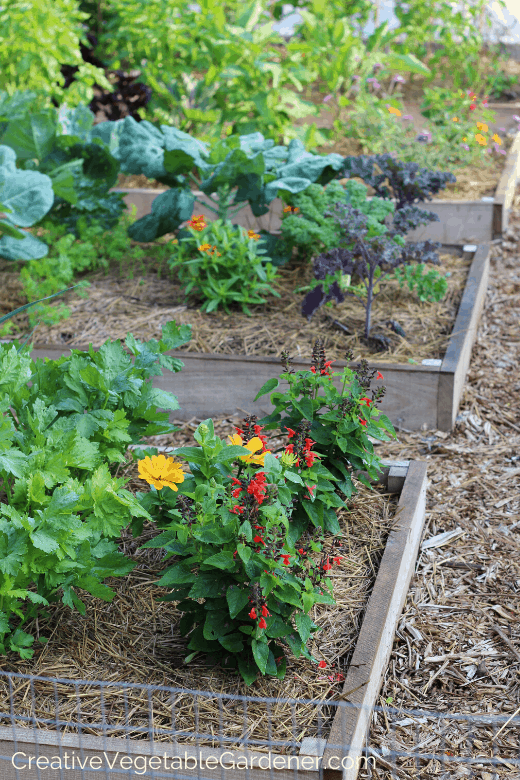 raised beds for vegetables