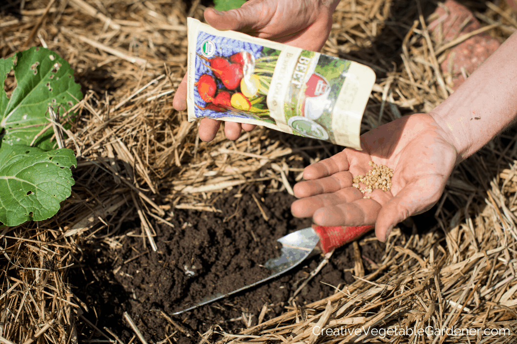 planting seeds in garden soil
