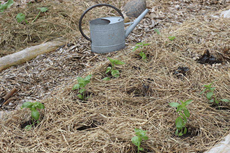 garden watering tips with mulch