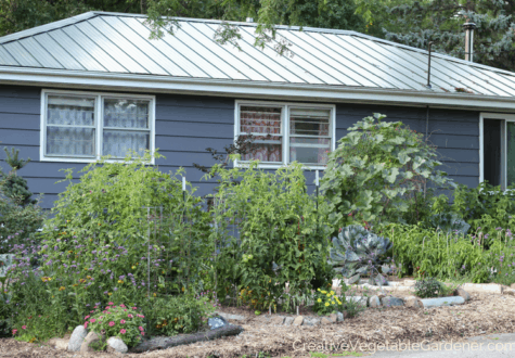 healthy vegetable garden without soil problems