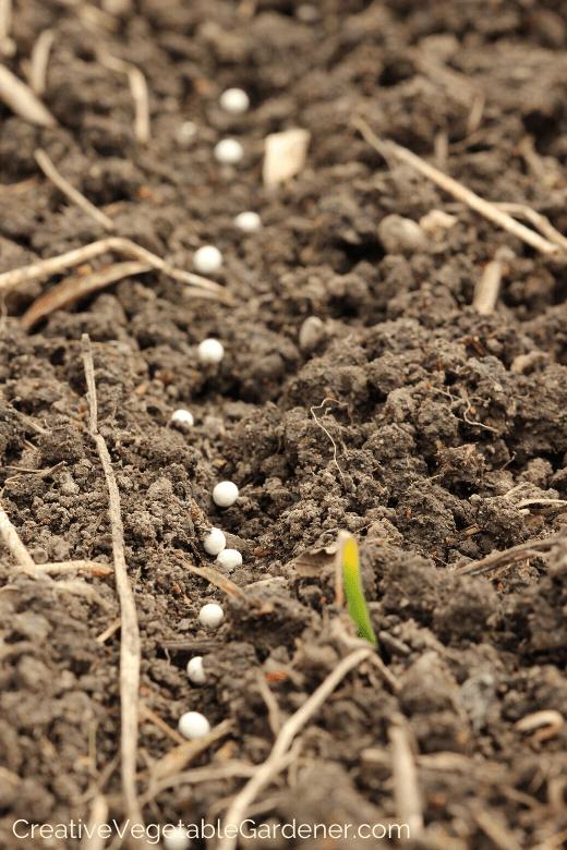 seeds to water in vegetable garden