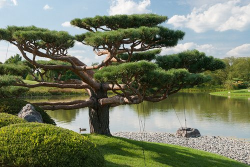 Japanese Garden at the Chicago Botanic Garden, Chicago area garden travel